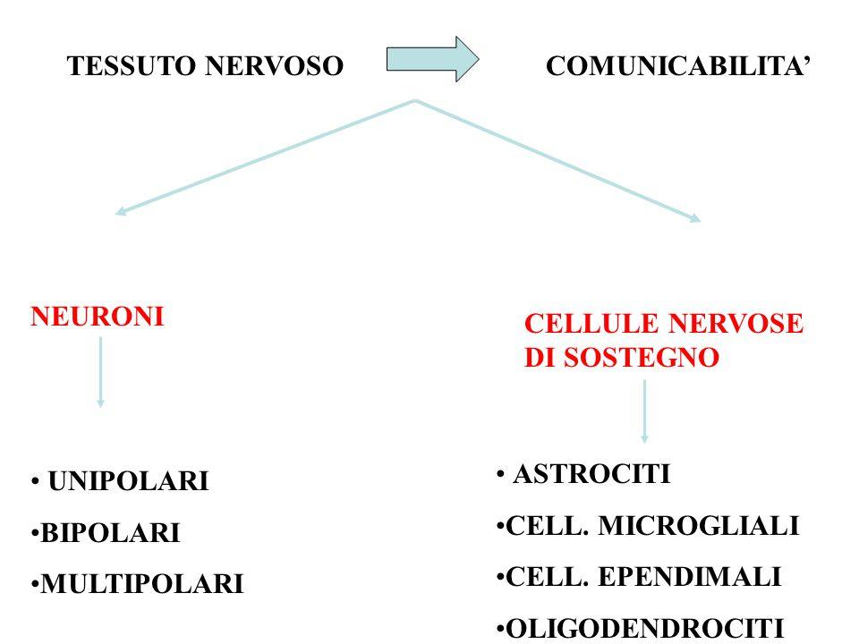TESSUTO NERVOSO COMUNICABILITA' NEURONI. CELLULE NERVOSE DI SOSTEGNO. ASTROCITI. CELL. MICROGLIALI.