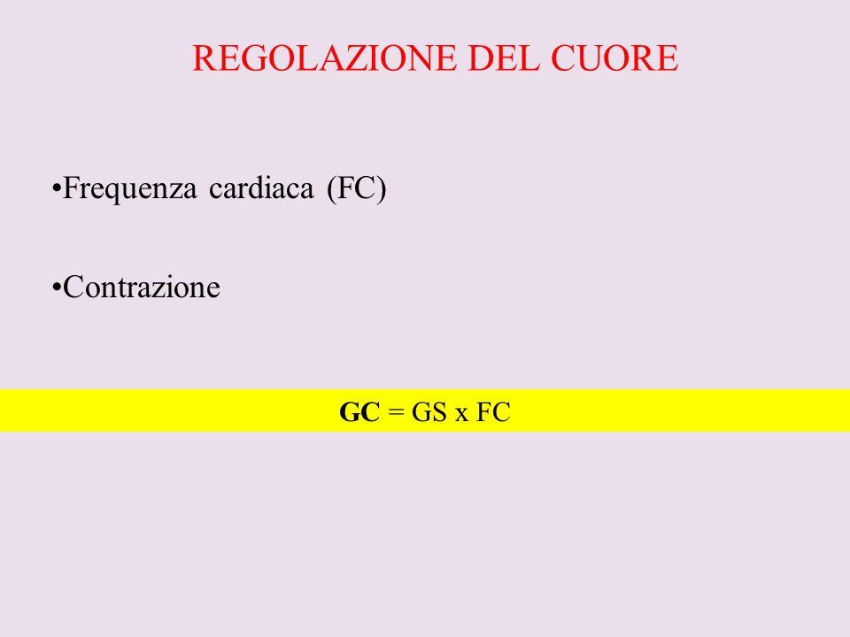 REGOLAZIONE DEL CUORE Frequenza cardiaca (FC) Contrazione GC = GS x FC