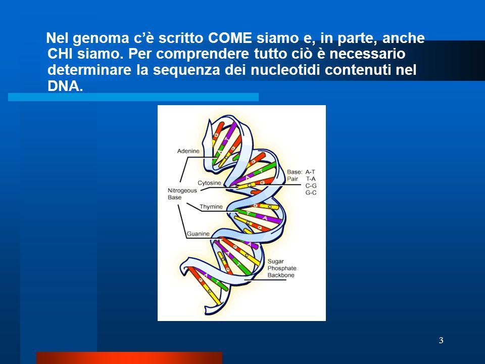 Nel genoma c'è scritto COME siamo e, in parte, anche CHI siamo