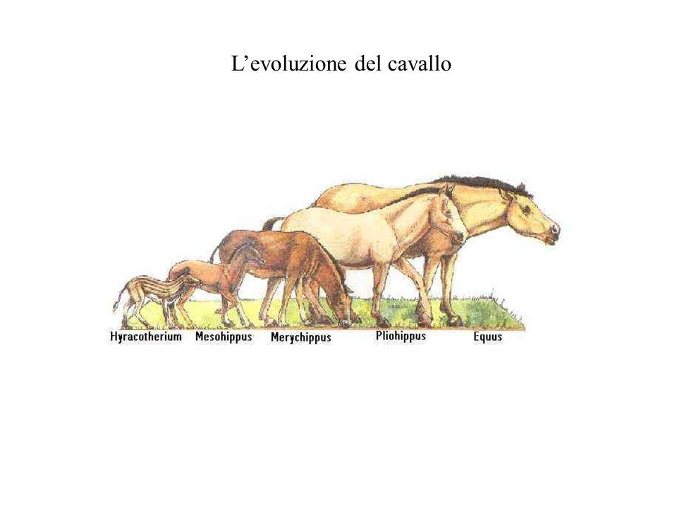 L'evoluzione del cavallo