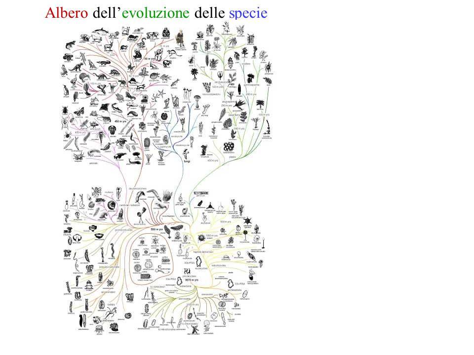 Albero dell'evoluzione delle specie