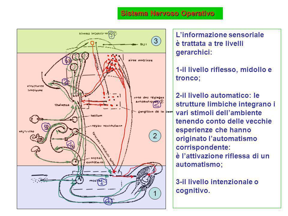 Sistema Nervoso Operativo