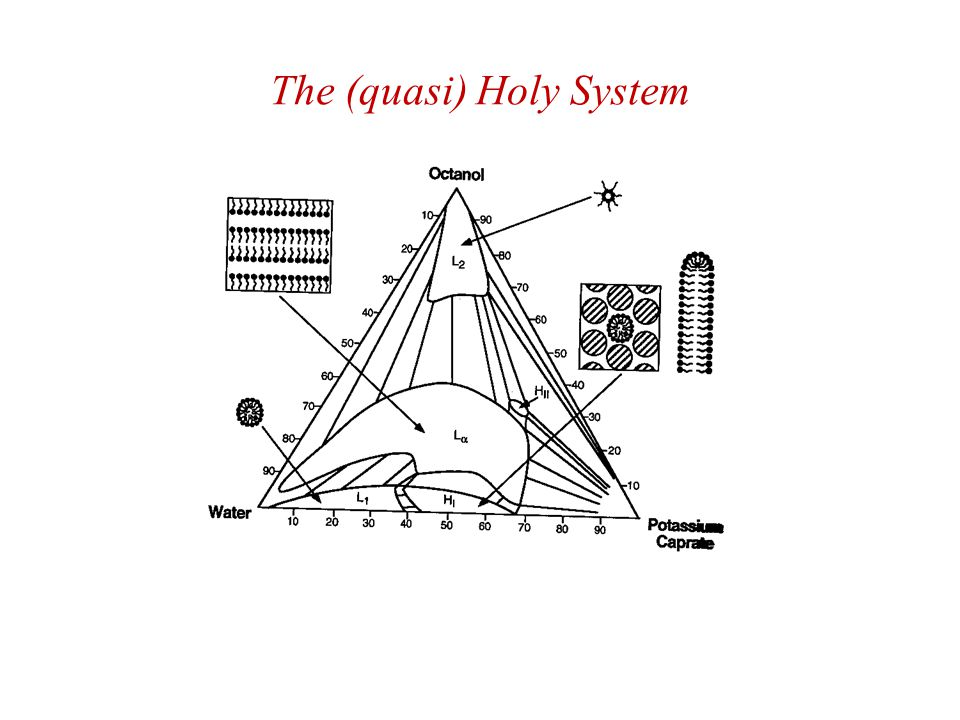 The (quasi) Holy System