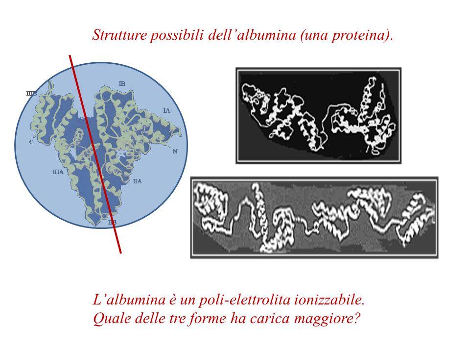 Strutture possibili dell'albumina (una proteina).