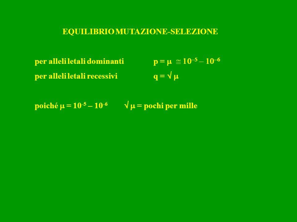 EQUILIBRIO MUTAZIONE-SELEZIONE