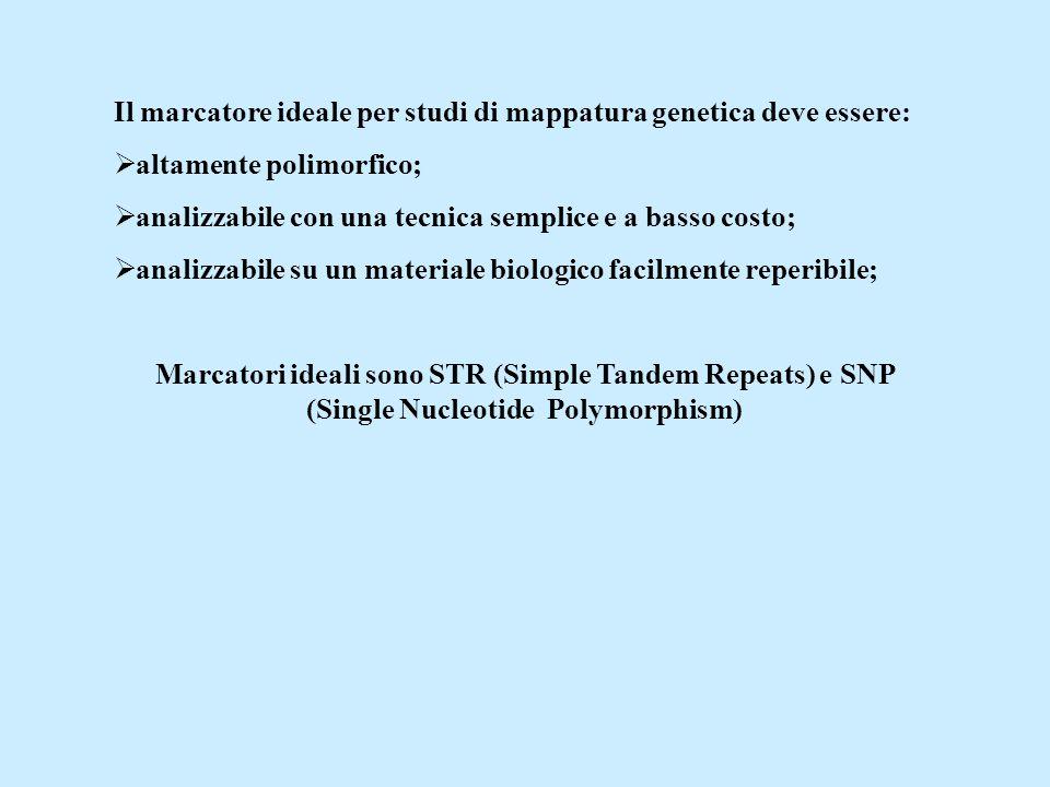 Il marcatore ideale per studi di mappatura genetica deve essere: