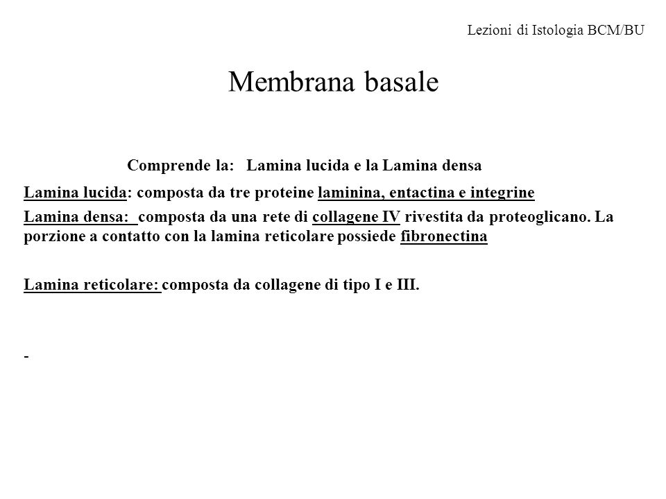 Comprende la: Lamina lucida e la Lamina densa