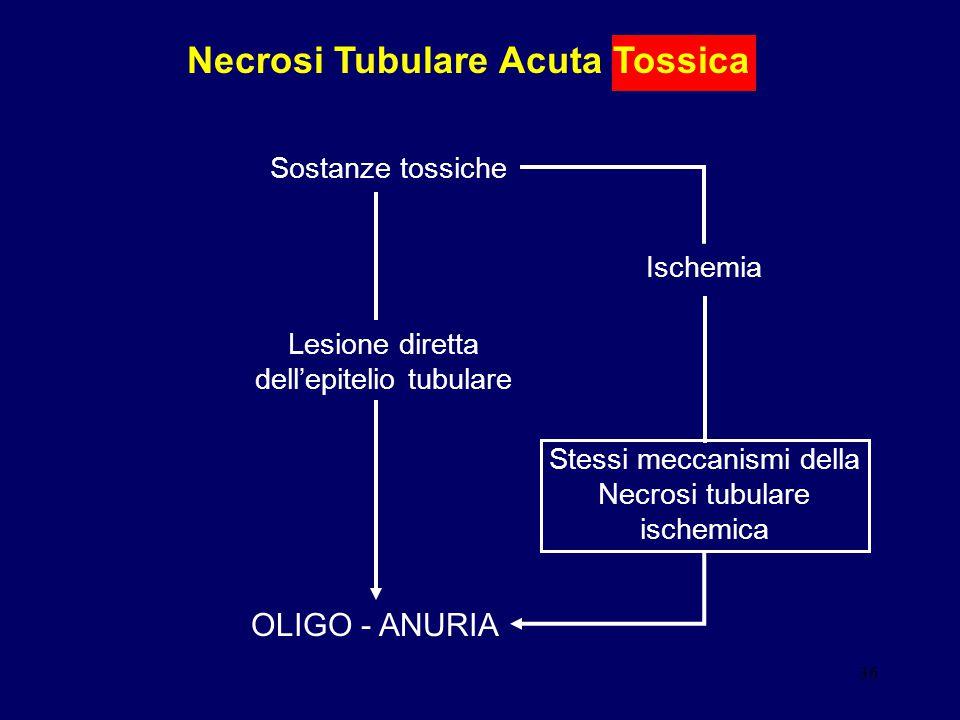 Necrosi Tubulare Acuta Tossica