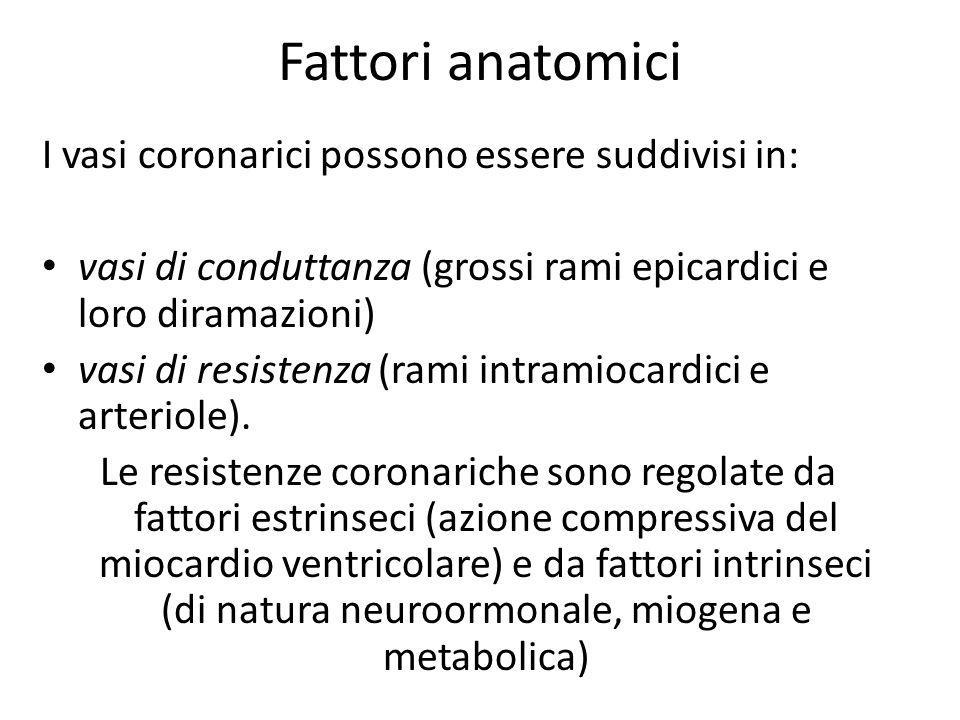 Fattori anatomici I vasi coronarici possono essere suddivisi in: