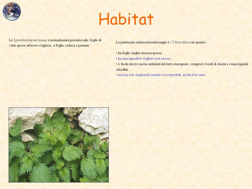 Habitat Lo Sporobolomyces roseus è normalmente presente sulle foglie di varie specie erbacee o legnose, a foglia caduca o perenni.