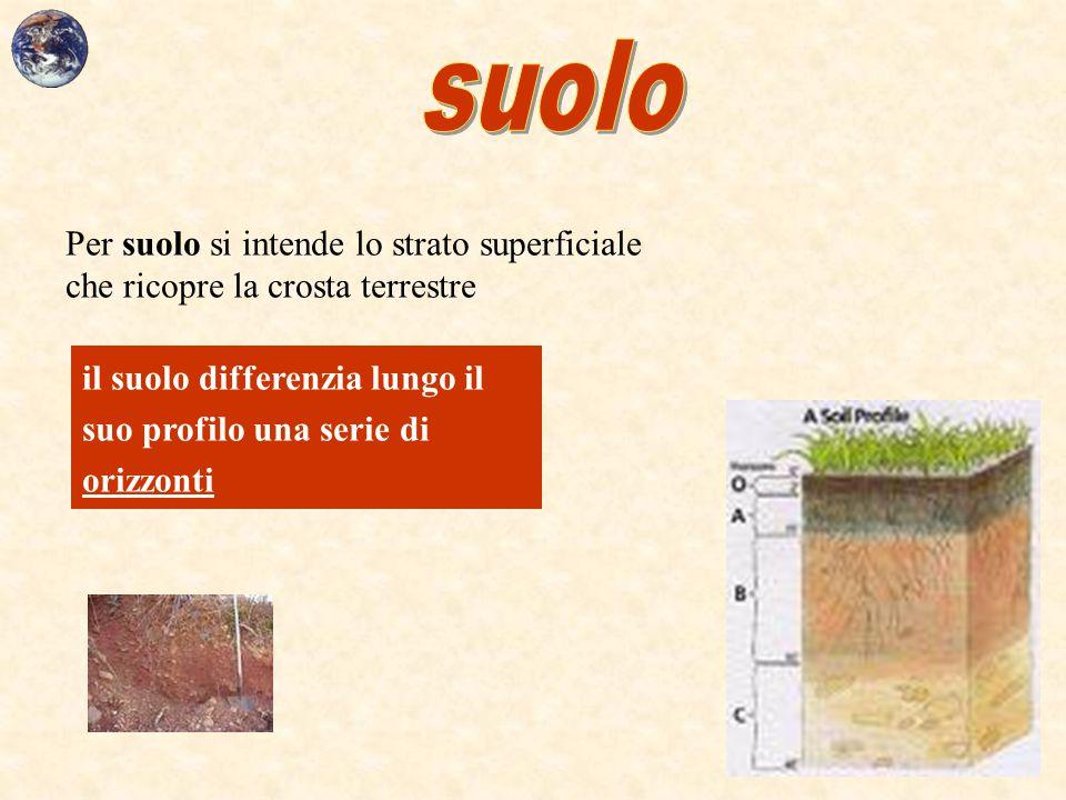 suolo Per suolo si intende lo strato superficiale che ricopre la crosta terrestre.