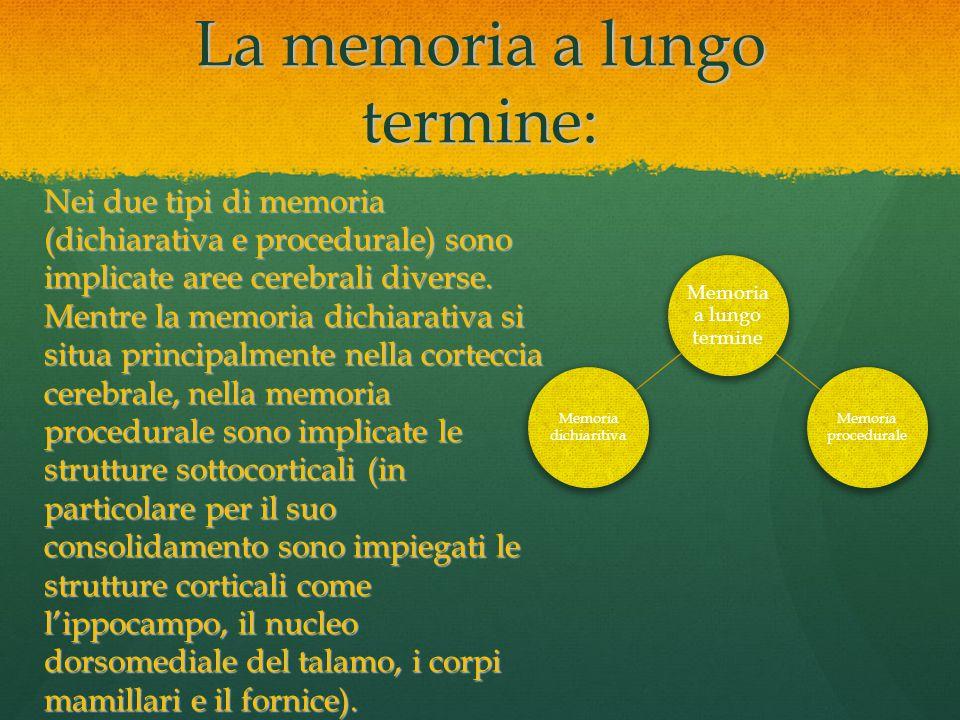 La memoria a lungo termine: