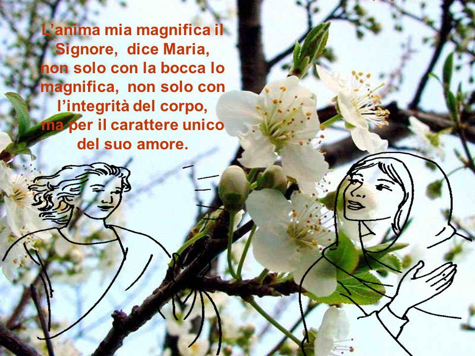 L'anima mia magnifica il Signore, dice Maria, non solo con la bocca lo magnifica, non solo con l'integrità del corpo, ma per il carattere unico del suo amore.