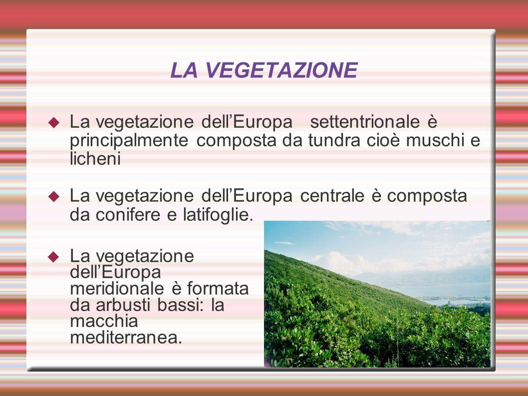 LA VEGETAZIONE La vegetazione dell'Europa settentrionale è principalmente composta da tundra cioè muschi e licheni.