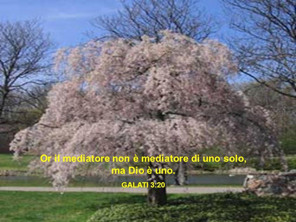 Or il mediatore non è mediatore di uno solo, ma Dio è uno.