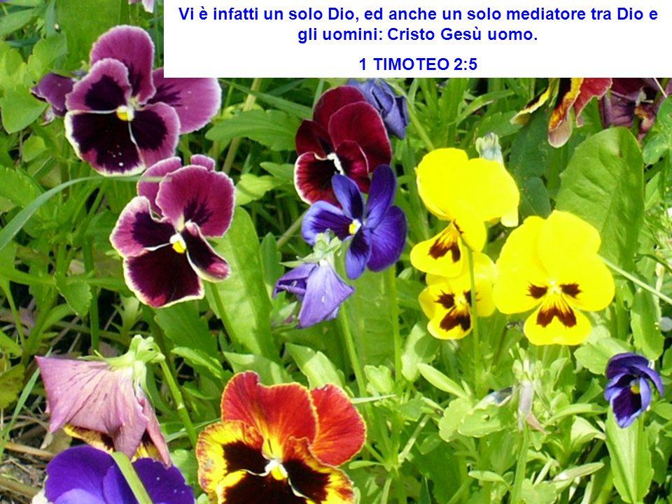 Vi è infatti un solo Dio, ed anche un solo mediatore tra Dio e gli uomini: Cristo Gesù uomo.