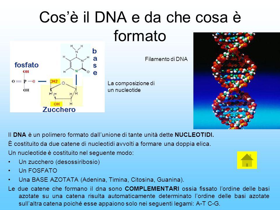 Cos'è il DNA e da che cosa è formato