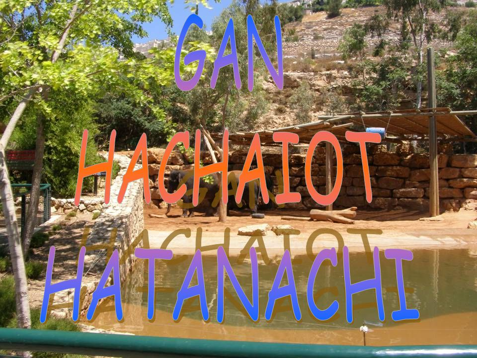 GAN HACHAIOT HATANACHI