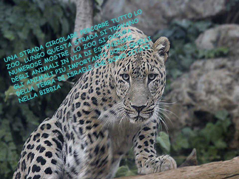 UNA STRADA CIRCOLARE PERCORRE TUTTO LO ZOO, LUNGO QUESTA STRADA SI TROVANO NUMEROSE MOSTRE. LO ZOO SI OCCUPA DEGLI ANIMALI IN VIA DI ESTINZIONE.