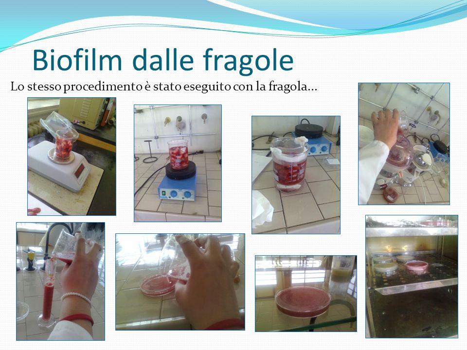 Biofilm dalle fragole Lo stesso procedimento è stato eseguito con la fragola...