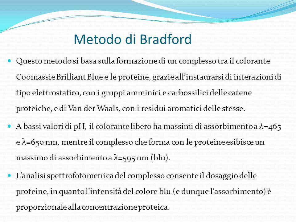 Metodo di Bradford
