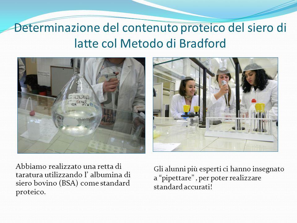 Determinazione del contenuto proteico del siero di latte col Metodo di Bradford
