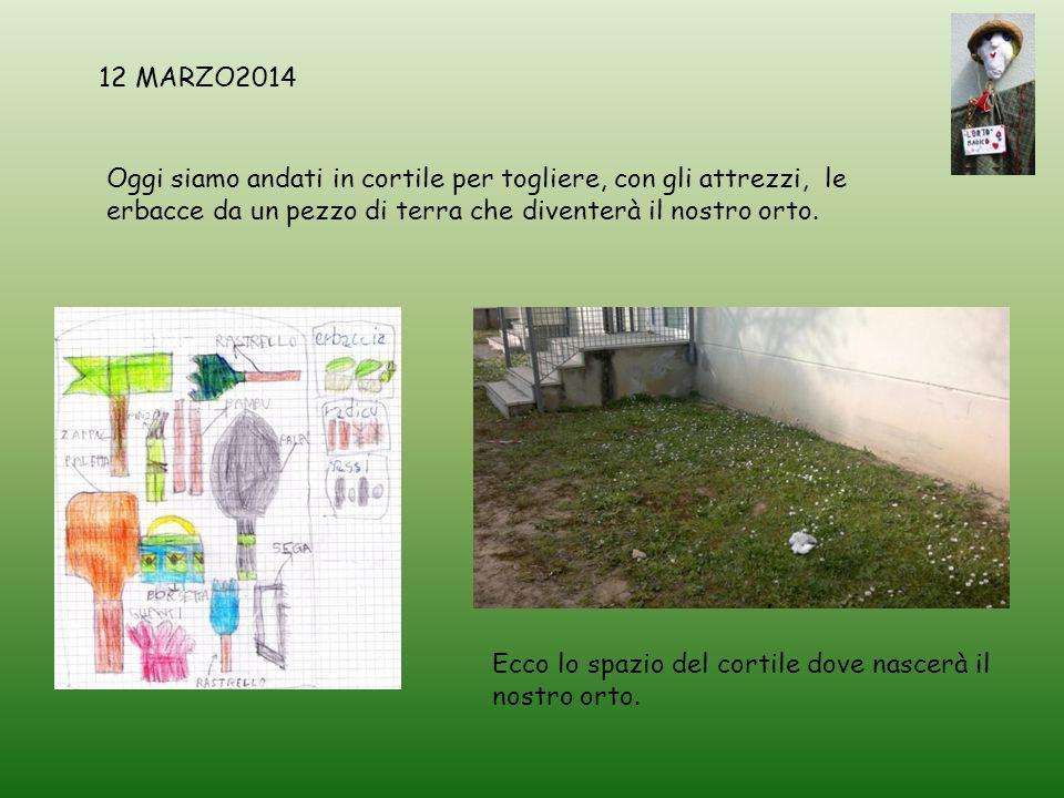 12 MARZO2014 Oggi siamo andati in cortile per togliere, con gli attrezzi, le erbacce da un pezzo di terra che diventerà il nostro orto.