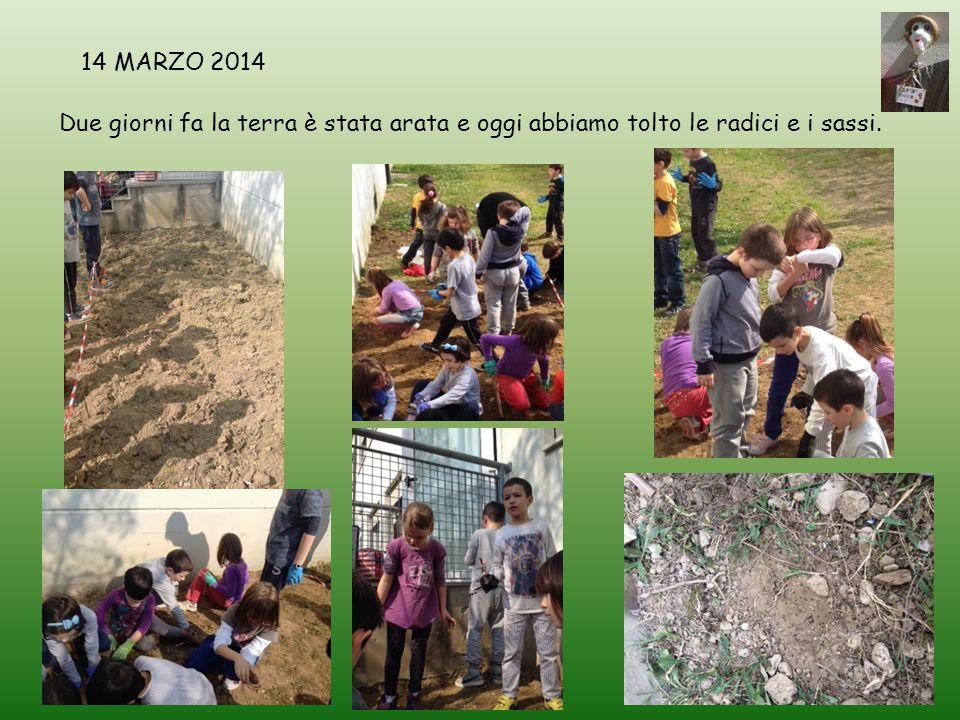 14 MARZO 2014 Due giorni fa la terra è stata arata e oggi abbiamo tolto le radici e i sassi.