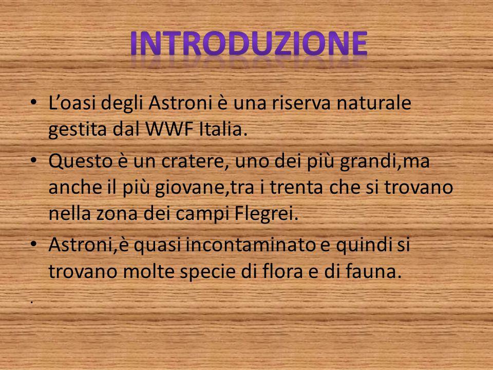 Introduzione L'oasi degli Astroni è una riserva naturale gestita dal WWF Italia.