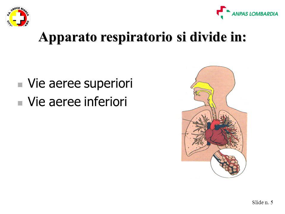 Apparato respiratorio si divide in: