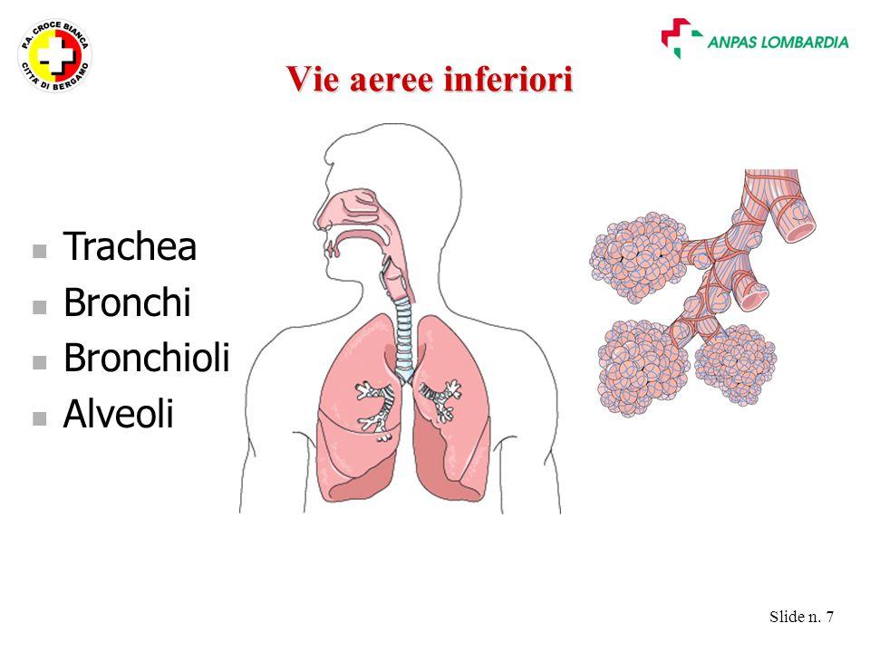 Vie aeree inferiori Trachea Bronchi Bronchioli Alveoli