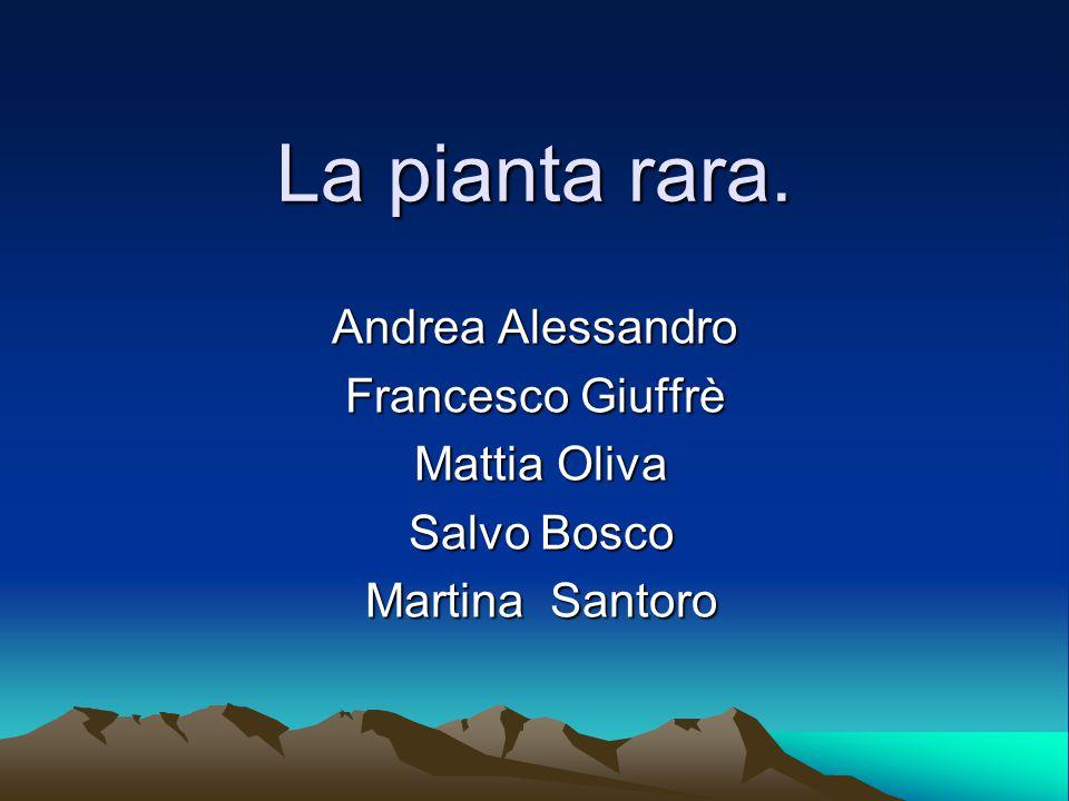La pianta rara. Andrea Alessandro Francesco Giuffrè Mattia Oliva