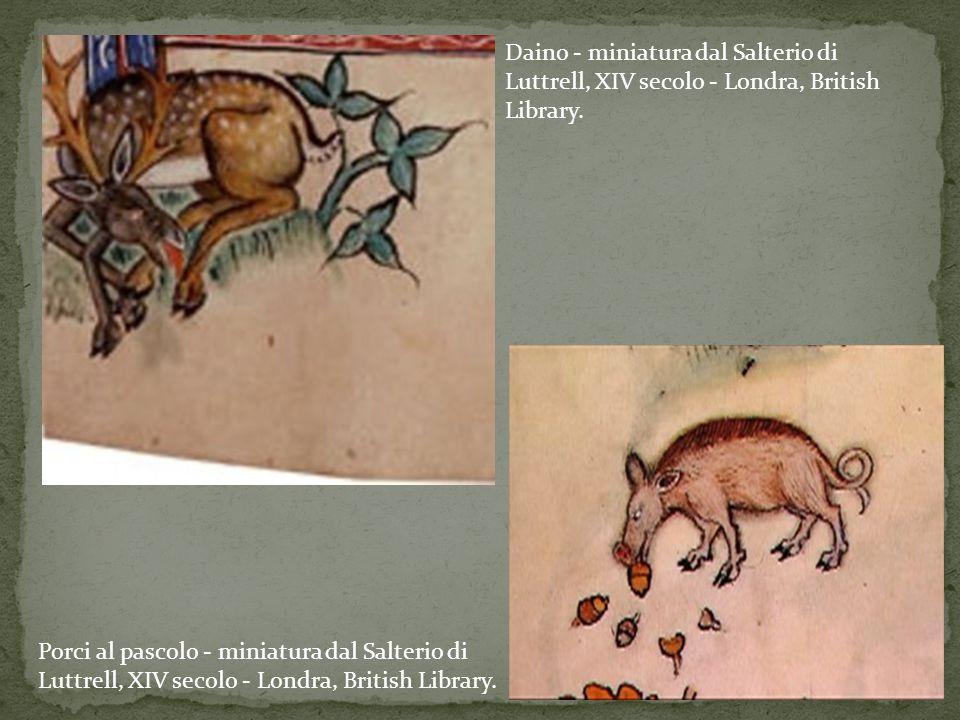 Daino - miniatura dal Salterio di Luttrell, XIV secolo - Londra, British Library.