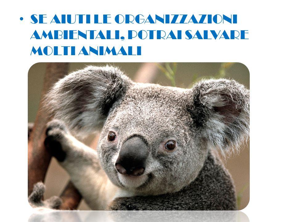 SE AIUTI LE ORGANIZZAZIONI AMBIENTALI, POTRAI SALVARE MOLTI ANIMALI