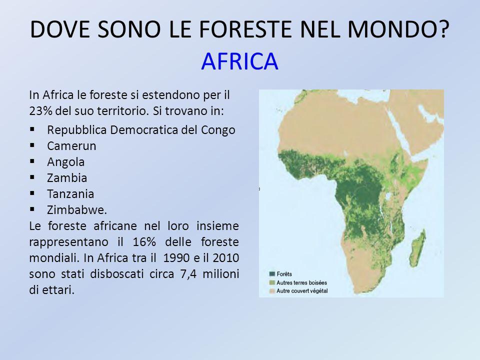 DOVE SONO LE FORESTE NEL MONDO AFRICA