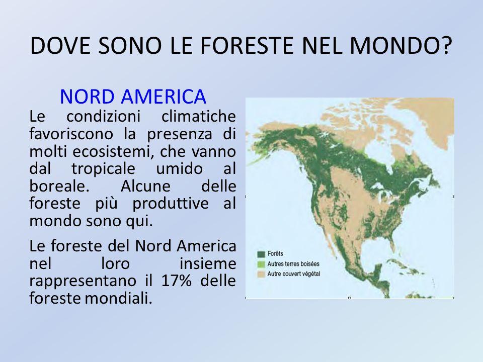 DOVE SONO LE FORESTE NEL MONDO