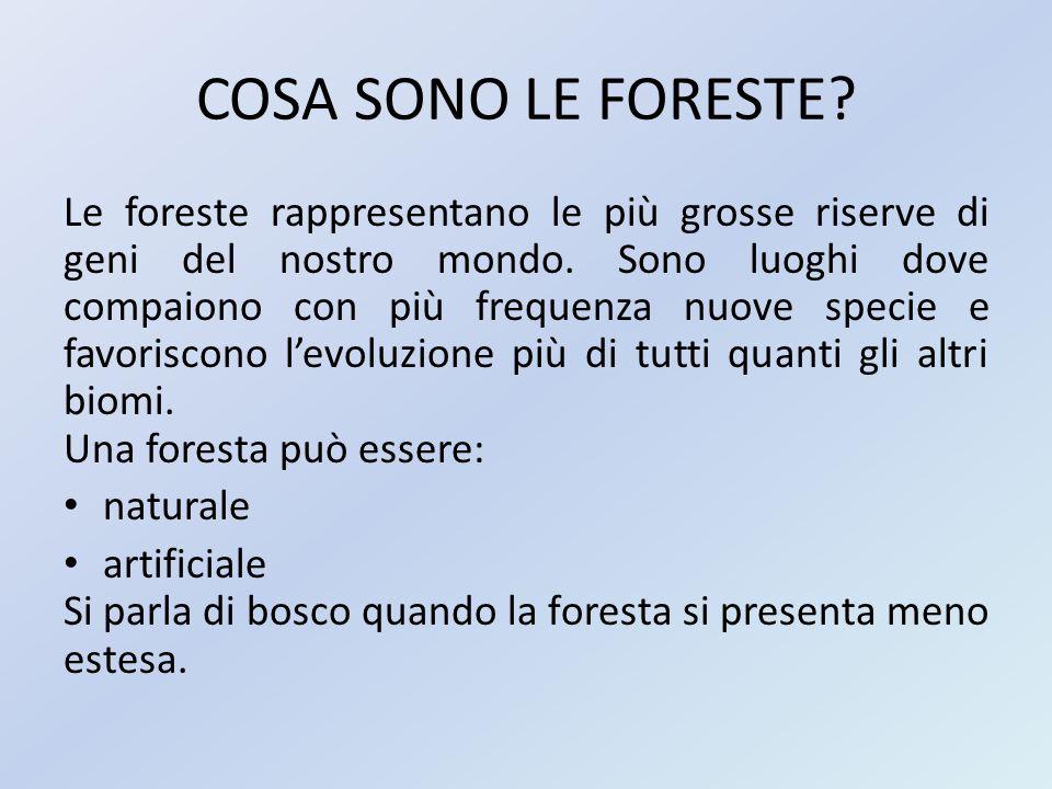 COSA SONO LE FORESTE