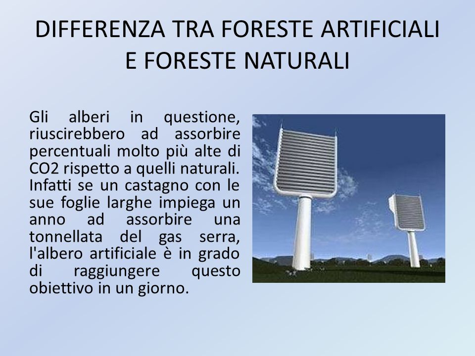 DIFFERENZA TRA FORESTE ARTIFICIALI E FORESTE NATURALI