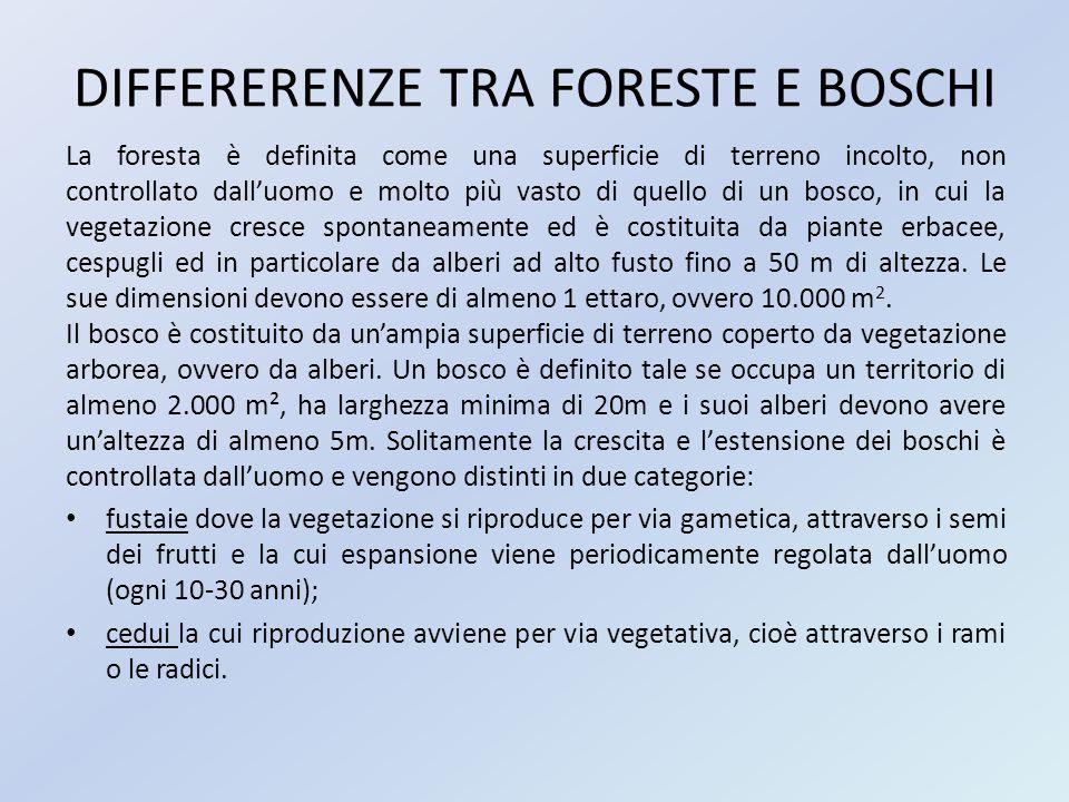 DIFFERERENZE TRA FORESTE E BOSCHI