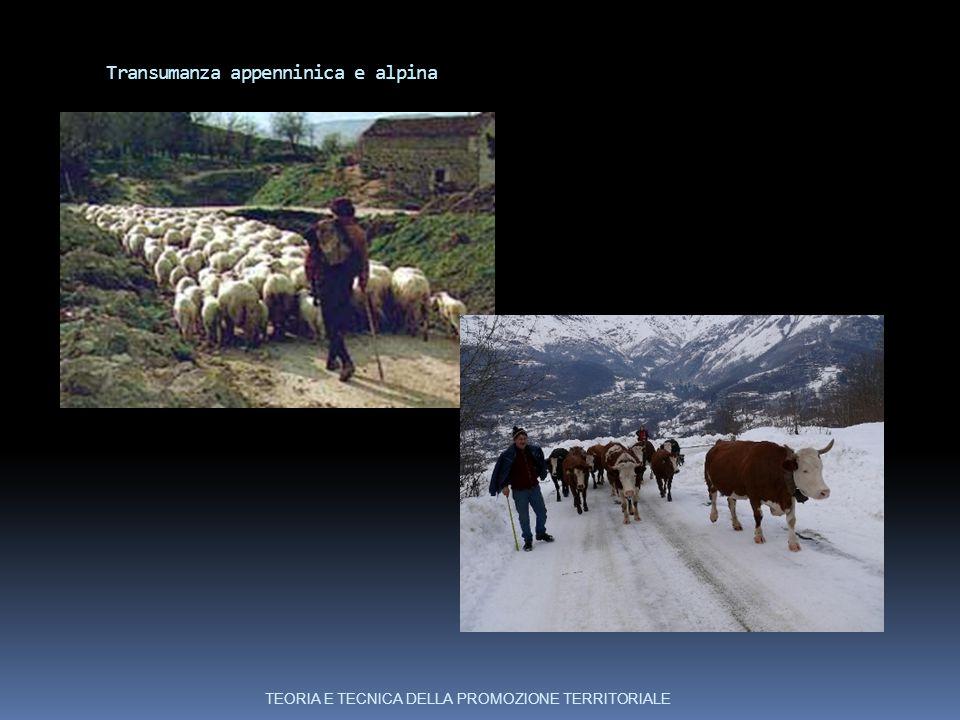 Transumanza appenninica e alpina