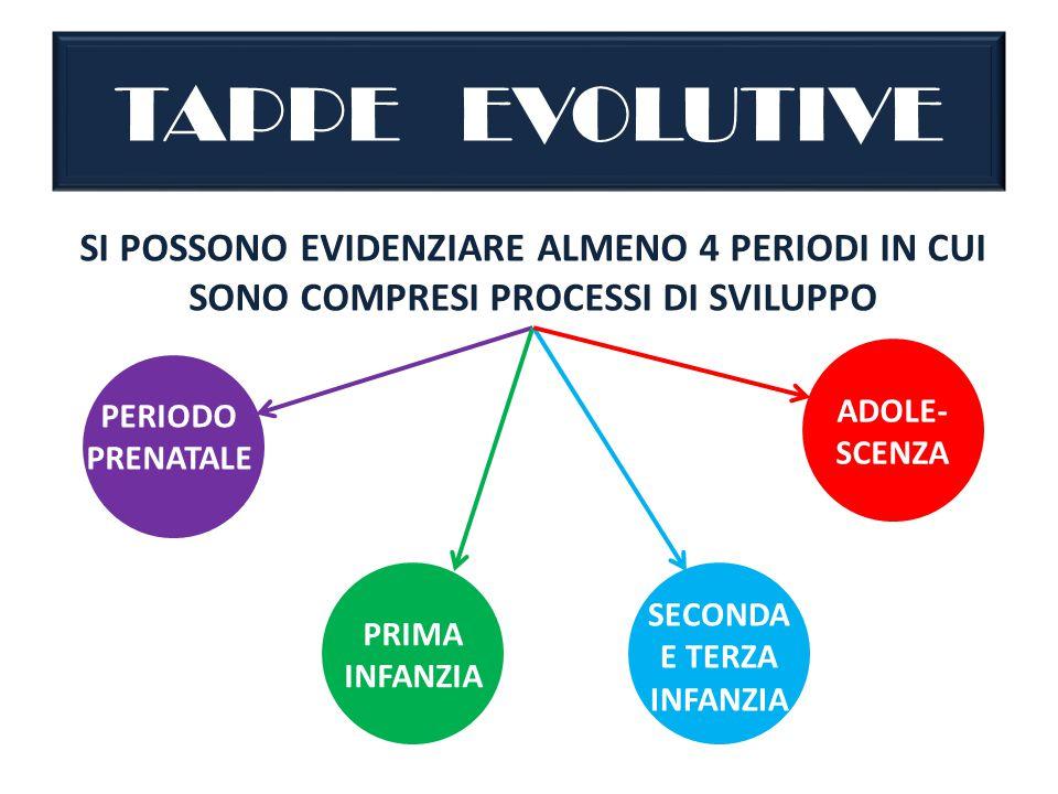 TAPPE EVOLUTIVE SI POSSONO EVIDENZIARE ALMENO 4 PERIODI IN CUI SONO COMPRESI PROCESSI DI SVILUPPO.