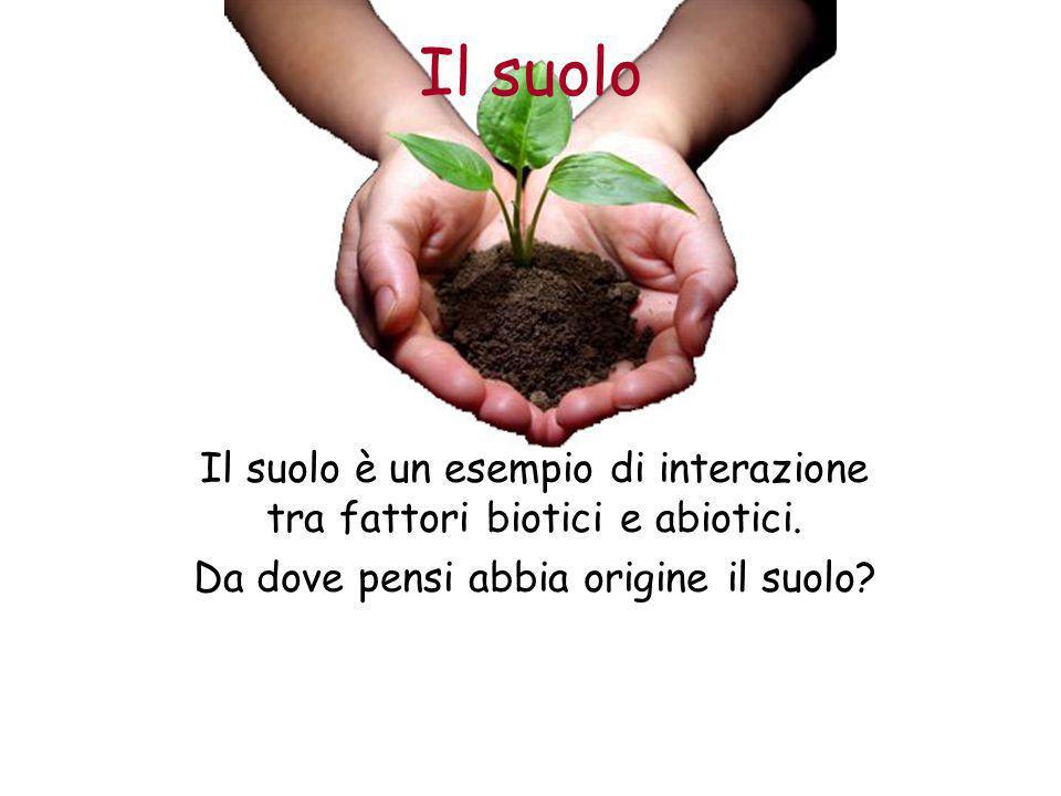 Il suolo Il suolo è un esempio di interazione tra fattori biotici e abiotici.