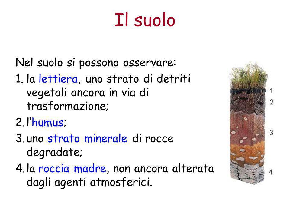 Il suolo Nel suolo si possono osservare: