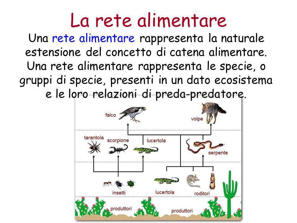 La rete alimentare Una rete alimentare rappresenta la naturale estensione del concetto di catena alimentare.