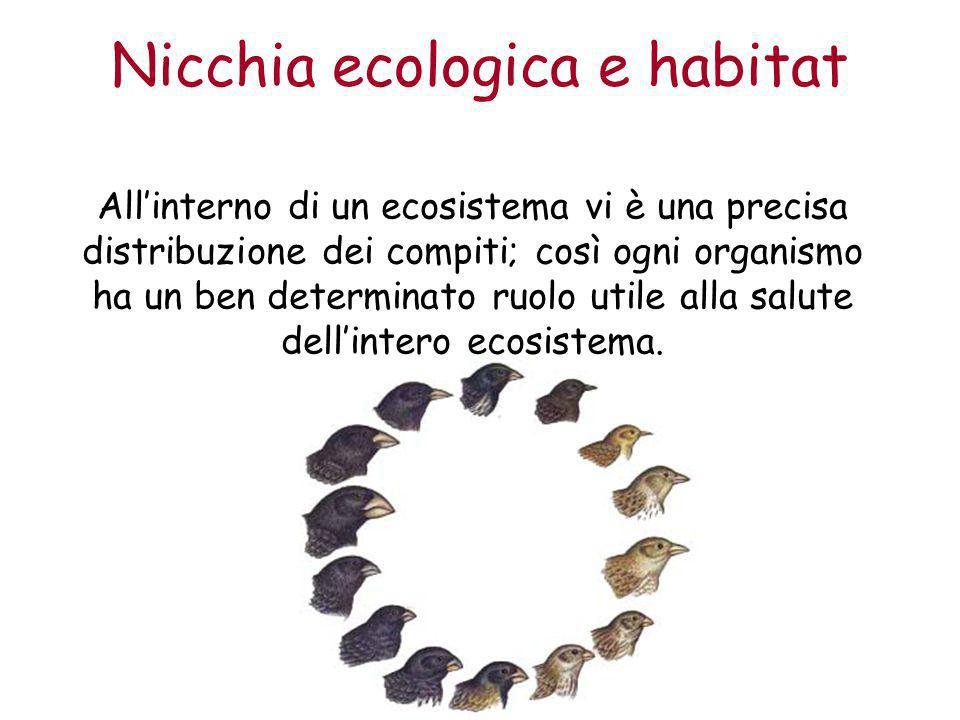 Nicchia ecologica e habitat