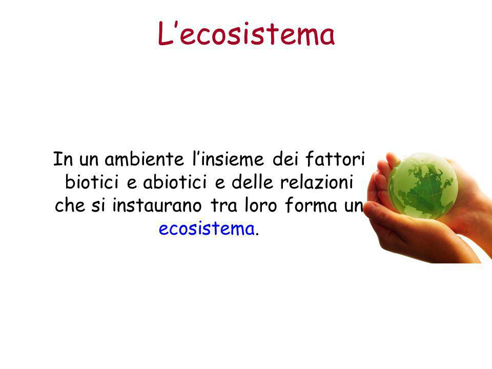 L'ecosistema In un ambiente l'insieme dei fattori biotici e abiotici e delle relazioni che si instaurano tra loro forma un ecosistema.