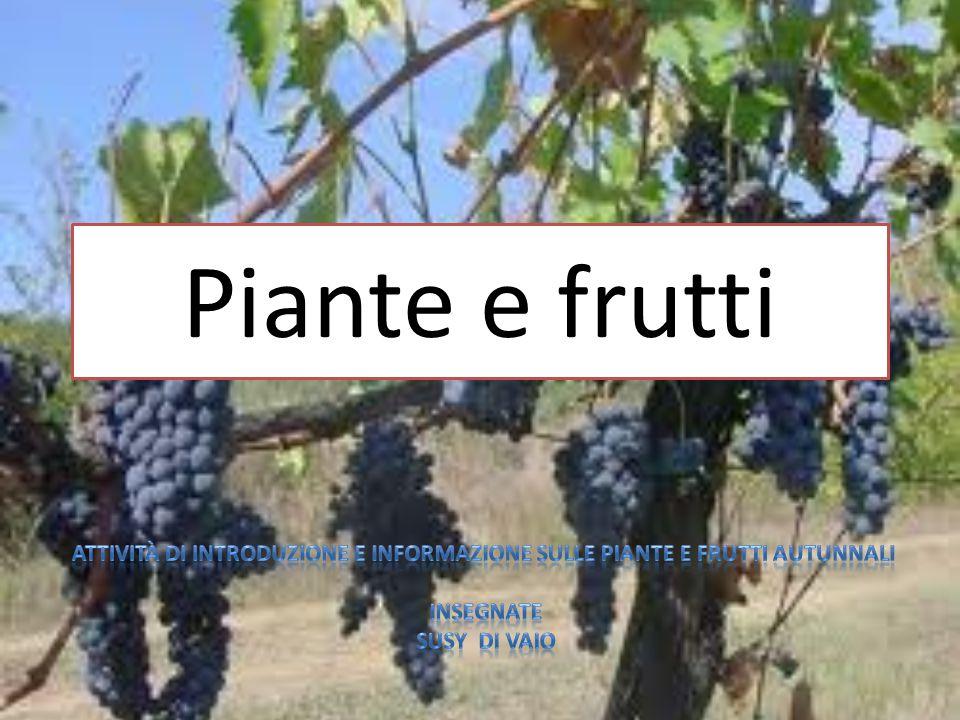 Piante e frutti Attività di introduzione e informazione sulle piante e frutti autunnali. iNSEGNATE.