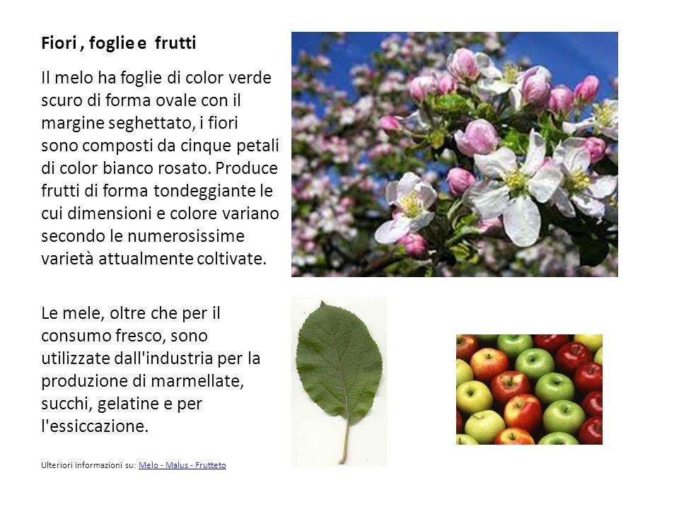 Fiori , foglie e frutti