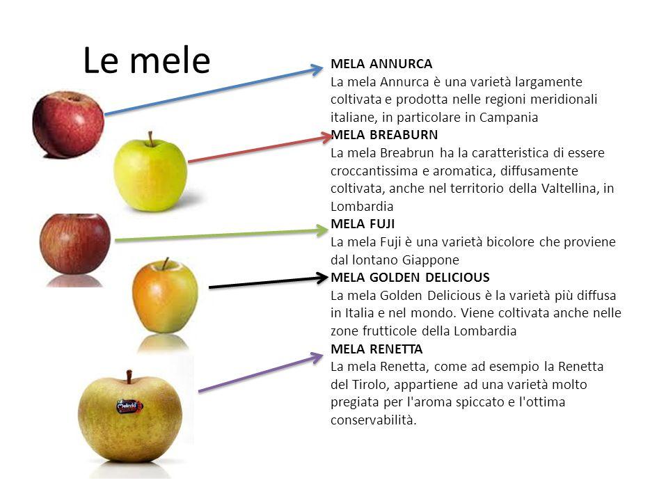Le mele MELA ANNURCA. La mela Annurca è una varietà largamente coltivata e prodotta nelle regioni meridionali italiane, in particolare in Campania.