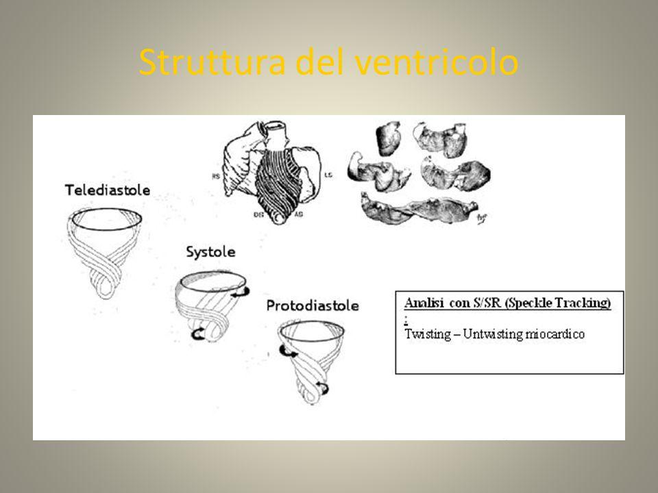 Struttura del ventricolo